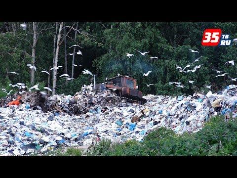 Администрация Вологодского района подаст в суд на арендатора свалки в Майском