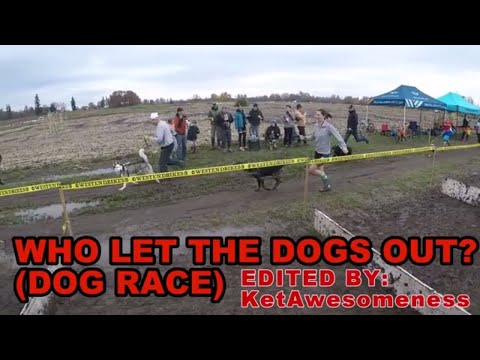 Who Let The Dogs Out? (DOGGIE DASH)