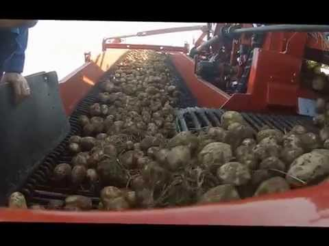 Spudnik Air-Sep harvester with Trash Conveyor option for 662