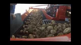 Spudnik Air-Sep harvester with Trash Conveyor option for 6621 and 6631