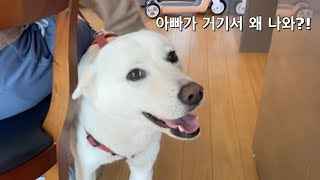 Dogs Reaction When They See their Owner Unexpectedly | Jindo Dog Fam Vlog