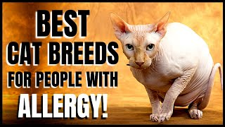 Best Cat Breeds for Allergy Sufferers