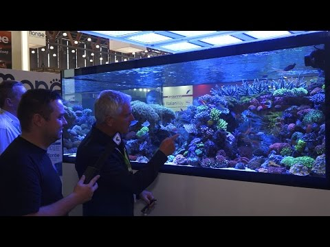 (English) De Jong Showtank The-Making-Of-Interview with CEO Arie De Jong | Interzoo 2016