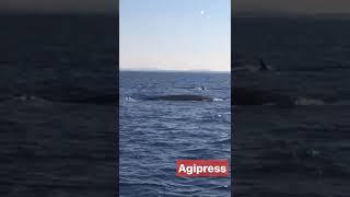Balene avvistate nel mare dell'Argentario - AGIPRESS