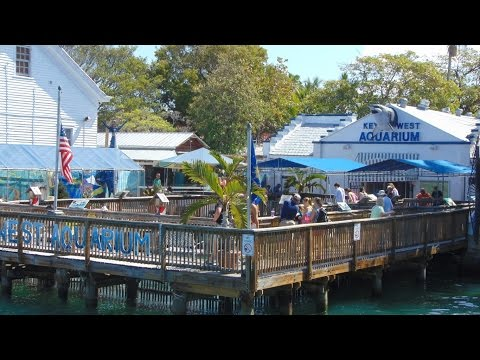 Key West Aquarium tour video [HD]