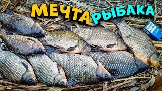 ТАКОЙ КАРАСЬ МЕЧТА РЫБАКА ЛОВЛЯ КАРАСЯ рыбалка на карася осенью