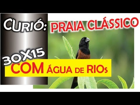 #11 FH 55 Segundos De Canto Para Canto Curió Praia Grande Super Clássico Com 30x15 De água De Rio