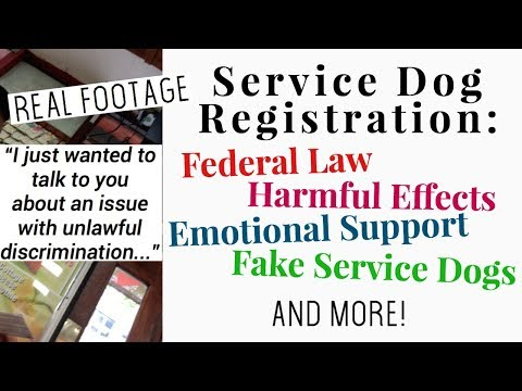 Service Dog Registration // Access Issue Footage, Federal Law