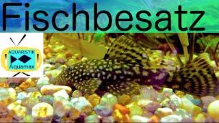 Wieviele Fische kann ich ins Aquarium geben? / #15