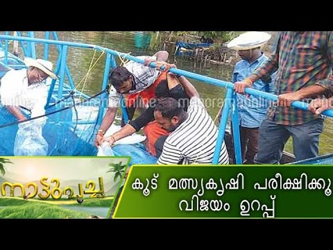 Cage fish farming becoming a hit in Kerala | Nattupacha|Manorama News