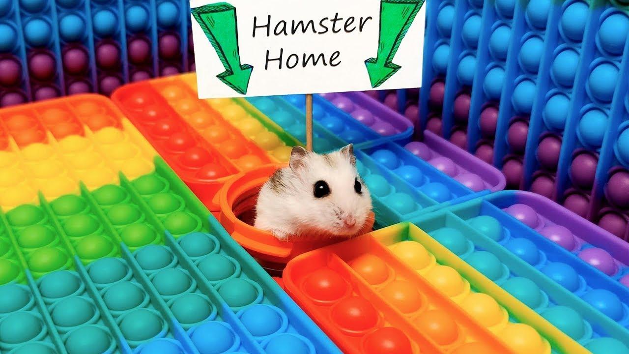 Hamster Pop It Maze - little Pet