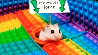 Hamster Pop It Maze  little Pet