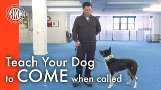 Teach Your Dog To Come When Called