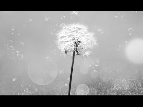 Dancing On The Light - Richard Dillon