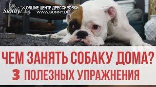 Чем занять собаку дома? 3 полезных упражнения для развития контакта