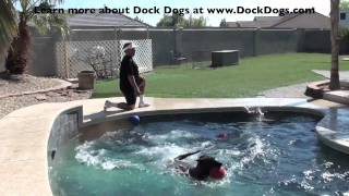 Yippee!!  Get Your Dog Jumping Into The Pool!