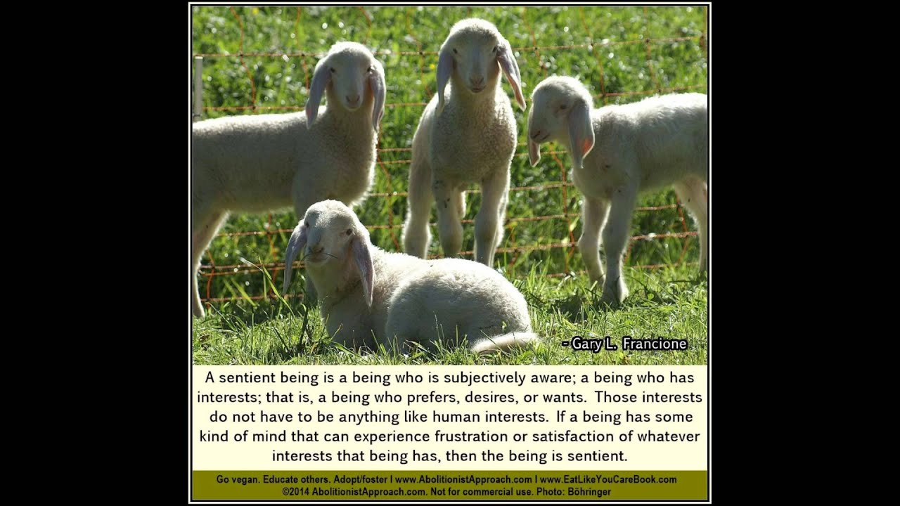 Animal Rights Quotes Compilation Of Animal Rights Quotes Professor Gary Lfrancione