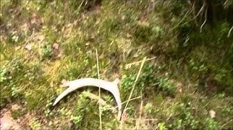 Hirvensarven metsästys