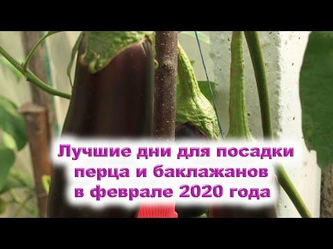 Лучшие дни для посева семян сладкого, горького перца и баклажанов на рассаду в феврале 2020 года. | февраль_2020 | календарь | горяченко | посевной | гороскоп | лунный | раиса | года | аст | на