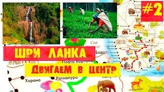 ШРИ ЛАНКА #2  Чайные плантации