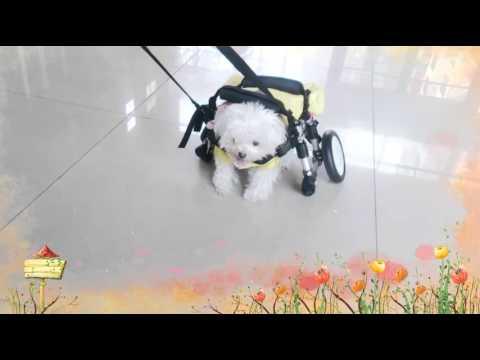Fab x Eco 「生態守護」計畫 :狗輪椅 | Doovi