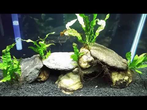Adding Marine Salts to My Brackish Aquarium