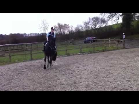 Billy Congo mare for sale