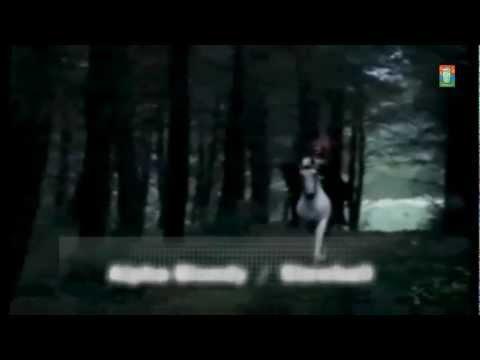 Alpha Blondy / Stewball [2011]