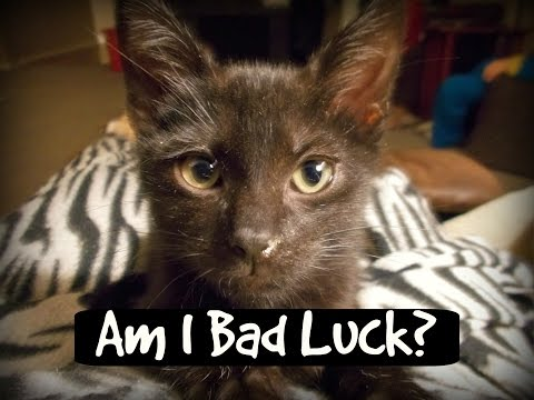 All 8 Kittens Snuggling, Playing & Lovin's ~ Black Cat Struggles ~ Litter #9