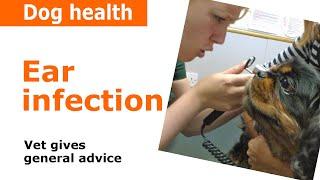 Dog Ear Infections - Vet Advice