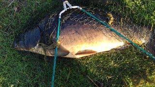 Рыбалка в Германии 50   Ловля крупного карпа  Поймал , ОТПУСТИ