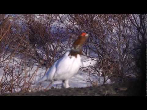 Ном, Аляска - Nome, Alaska (HD 1080x720)