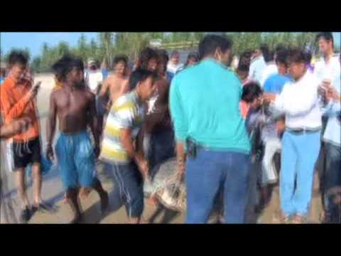 Wildlife Rescue Goa:Olive Ridley Turtle rescue and release by Benhail Antao
