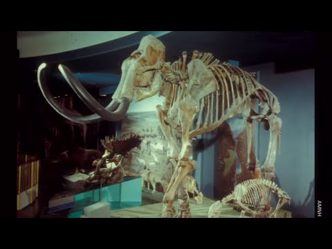 The Extinct Ice Age Mammals of North America