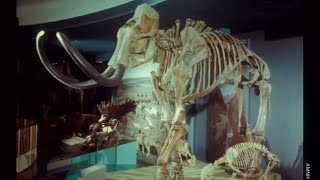 The Extinct Ice Age Mammals of North America