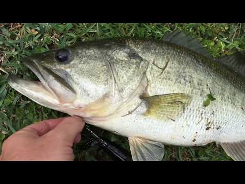 Highway Bassin' Tifton Georgia - Whopper Plopper BIG Bass