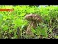 Как не отравиться грибами и кому нельзя их есть?