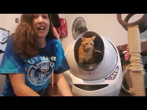 My cats and I cant get enough of the Litter-Robot!    A Litter-Robot Testimonial