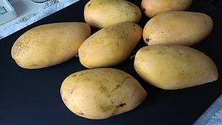 Luzon Mangoes from the Philippines  菲律賓呂宋芒果 Tree Ripened  樹上熟