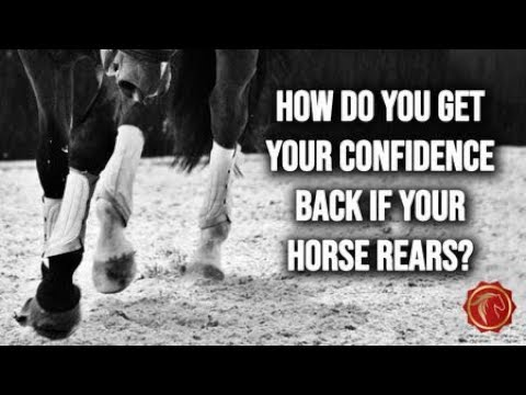 Download HOW DO YOU GET YOUR CONFIDENCE BACK IF YOUR HORSE REARS? - FearLESS Friday Episode 76