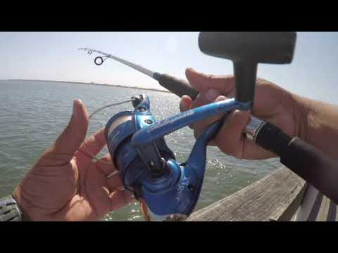 Crazy Fishing Action At The Somerspoint, NJ Ship Point Dock