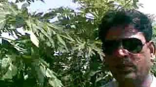 Neeraj Lodhi Farm house