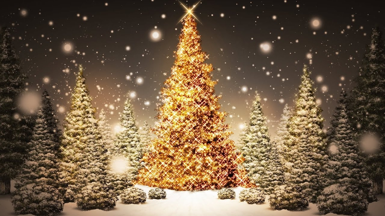 10 Tallest Christmas Trees In The World