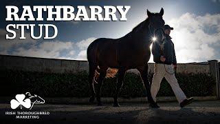 ITM Irish Stallion Showcase 2021 - Rathbarry Stud