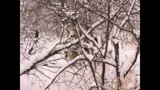 Охота и рыбалка в Якутии - Охота на волка.