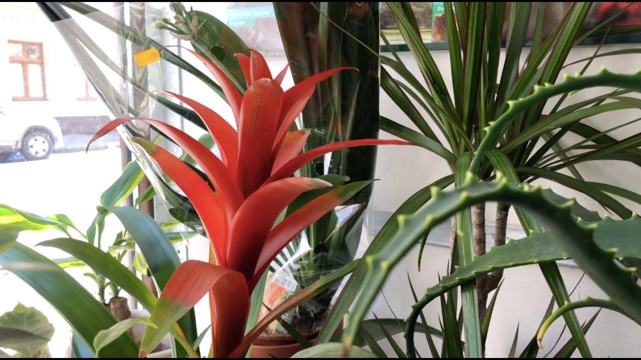 Kwiaty Do Domu Radzimy Od Czego Zaczac Echo24 Tv