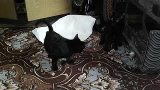 Коты после валерьянки))