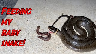 BABY SNAKE LOVES WORMS!!! (Explaining BIG Life Changes)
