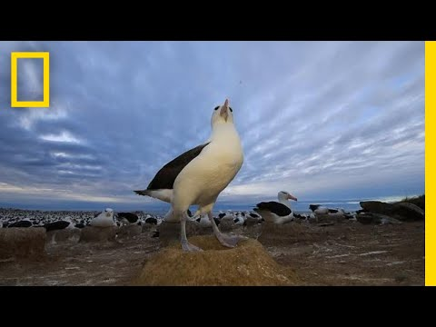 After Years of War, Nature is Flourishing on These Tiny Islands | National Geographic