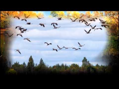 Клип для детей на песню Осень постучалась к нам
